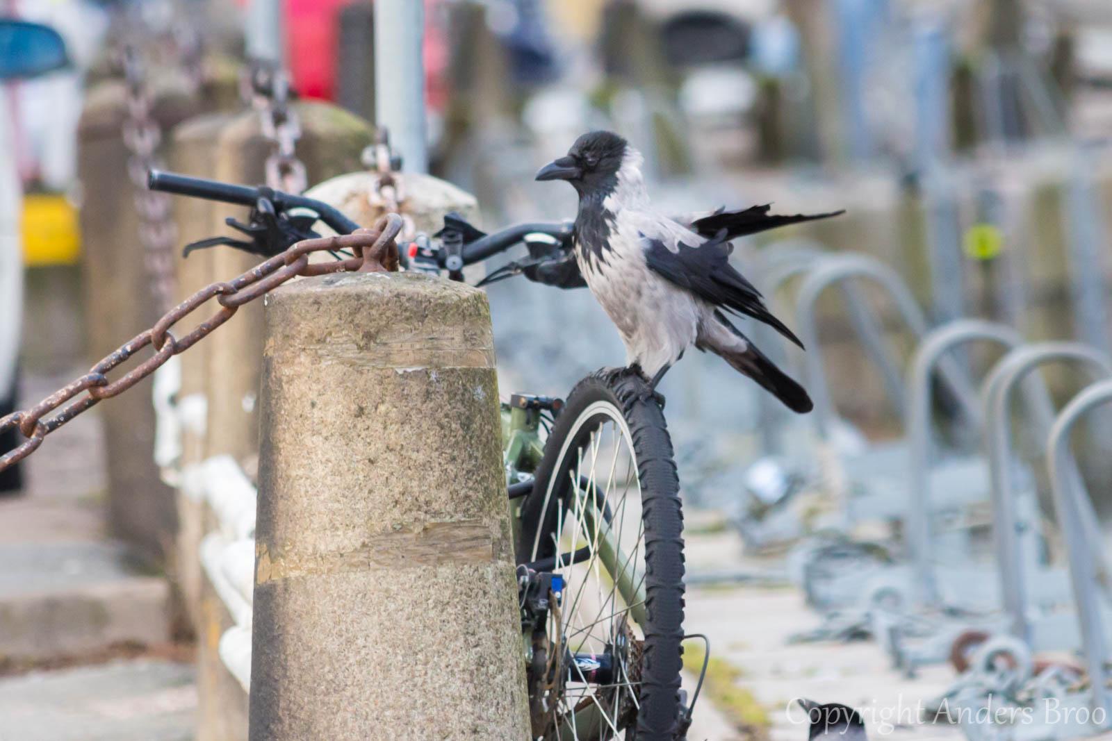 En cykeltur kanske lockar, men då får du vända på cykeln först.
